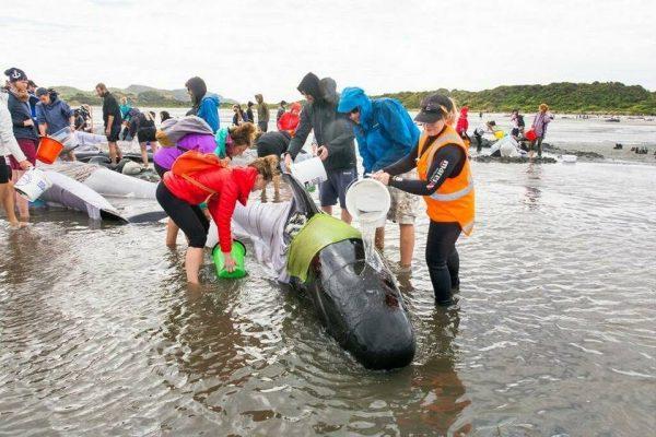 project Jonah Feb charities - project Jonah Feb 600x400 - Our Giving Back Program