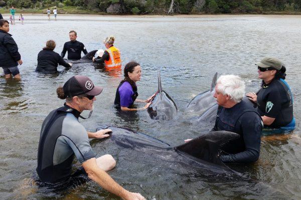 stranding at Mangawhai Heads in 2015 charities - stranding at Mangawhai Heads in 2015 600x400 - Our Giving Back Program